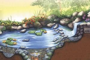 How Does Your Water Garden Grow Utahvalley360