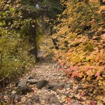 Turn over a new leaf: Canyon drives for seeing fall