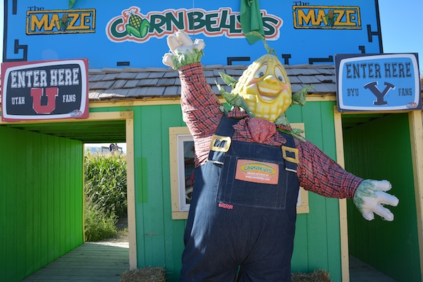 Cornbelly's maze is open through (Photo by Rebecca Lane)