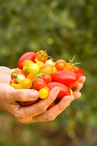 You don't need a green thumb to grow vegetables in your Utah Valley backyard. This summer, try a few varieties of tomatoes to find your favorite.