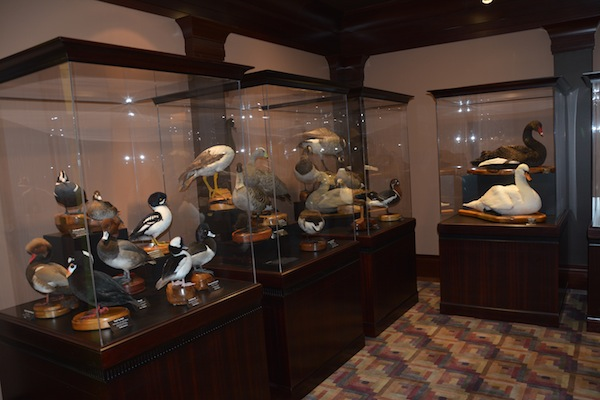 "While these taxidermy birds existed in the Bean Museum before, they've ""flown south"" to a new home with protective glass. (Photo by Rebecca Lane)"