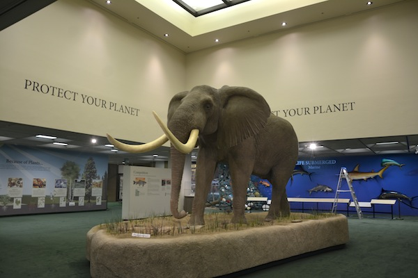 "The museum's theme, ""Protect your planet,"" is written on the walls by the elephant. (Photo by Rebecca Lane)"