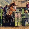 "City celebrations get off to a good ""art"" with Springville's celebration June 7-14. One of the many events is a rodeo."