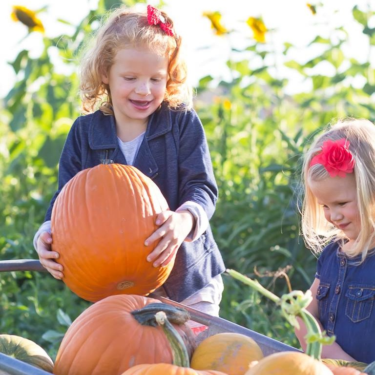 Hee Haw Farms has a pumpkin patch where people can pick their own pumpkins. (Photo courtesy Hee Haw Farms)