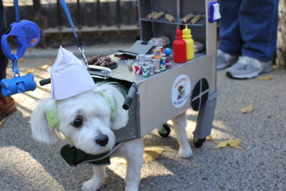 "(Photo by Huffington Post in ""2013 NYC Halloween Dog Parade"")"