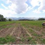 Provo council looking at future of farmland