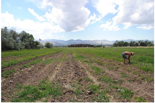 This shows the Gene and Deane Wheadon Farmland Preserve in Salt Lake County. The county bought the property in 2008 and preserved it as a community garden, orchard and trail. (Photo coutesy Wheadon | Utah Open Lands)