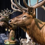 Call of the Wild: Great Outdoors Expo brings the outdoors indoors