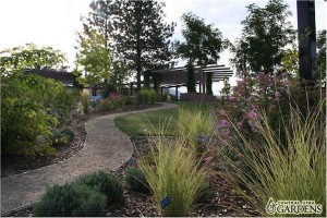 Central Utah Gardens has different types of grasses on display that use less water. (Photo courtesy Central Utah Gardens)
