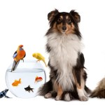 6 low-maintenance pets for families instead of a dog