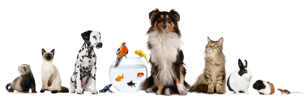 Image result for menagerie of pets
