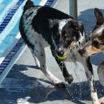 16 adorable pictures of Provo's Puppy Paddle Pool Party