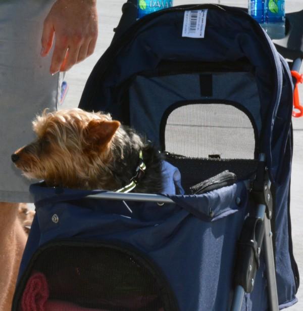 Puppy-stroller