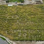 For Cornbelly's 20th anniversary, the maze is based on the minions this year. (Photo by Dave Blackhurst)