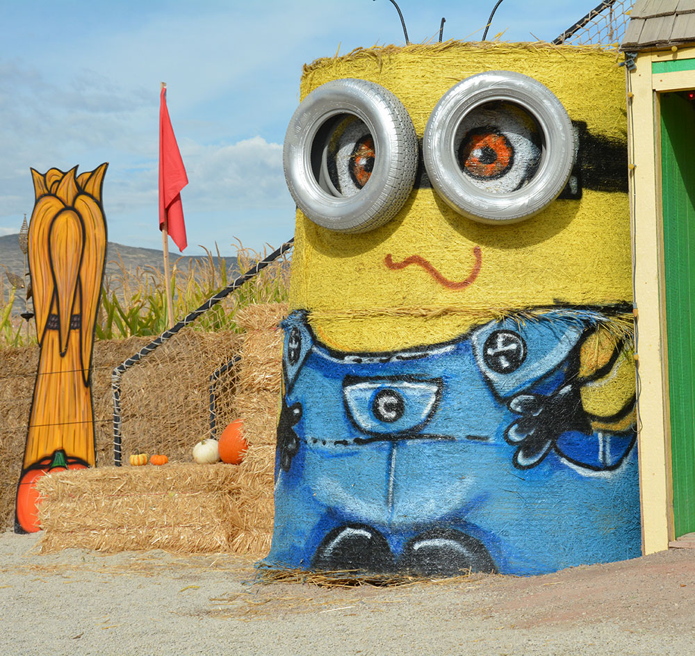 Cornbelly's corn maze had Minions as the theme for this year. The last day to get lost in the maze is Saturday. (Photo by Dave Blackhurst)