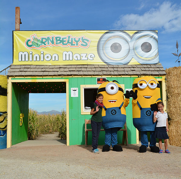 Minions are helping Cornbelly's celebrate its 20th anniversary with a Minion-themed game in the maze, character appearances, and outdoor showings of the movie. (Photo by Dave Blackhurst)
