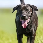 What a dog taught me about the atonement