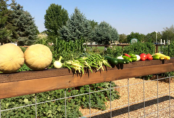 The LiVe Well Garden at Orem Community Hospital welcomes residents to help plant a garden and keep the produce. (Photo courtesy Intermountain Healthcare)