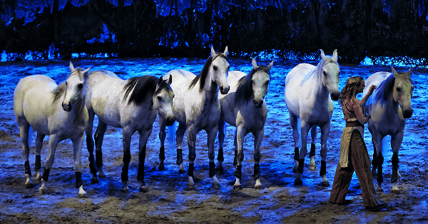 Odysseo has 65 horses in the Cavalia show at South Town.