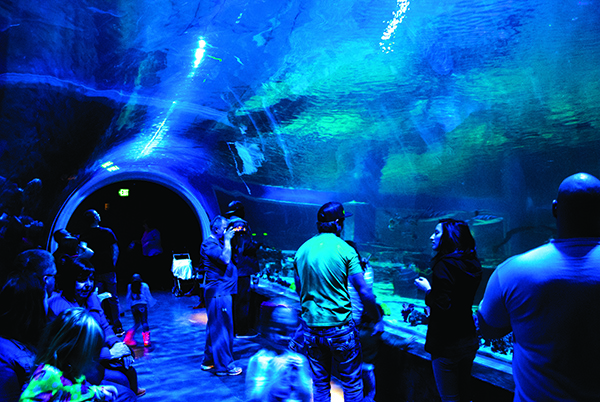 "ABC's ""Shark Tank"" has nothing on The Loveland Living Planet Aquarium. With a 300,000-gallon shark tank and a 40-foot shark tunnel, you can stare down a dozen different sharks and live to tell the tale. (Photo courtesy Loveland Living Planet Aquarium)"