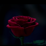 Disney releases first teaser trailer of live-action 'Beauty and the Beast'