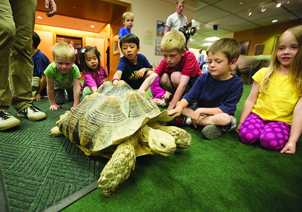 Kids can learn about the world around them by sight, sound and touch at the Monte L. Bean Life Science Museum's daily live animal showings. (Photo by Jaren Wilkey/BYU)