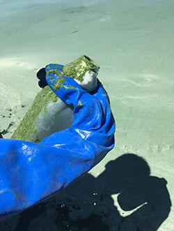 The Utah Deparment of Environmental started testing Utah Lake for an algal bloom on Wednesday. Utah Lake is closed until further notice. (Photo courtesy Utah DEQ)