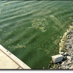 Utah Lake and Payson Lake advisories updated following more algal bloom testing