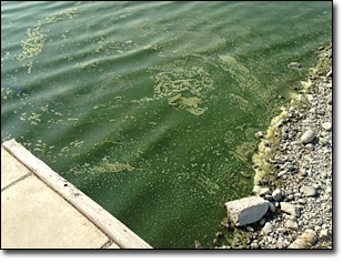 The Utah Health Department has updated the advisory warnings for Utah Lake and Payson Lake pertaining to the algal bloom. (Photo courtesy DEQ)