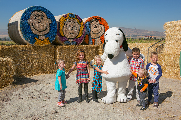 "Cornbelly's corn maze theme for 2016 is ""Snoopy For Prez."" (Photo courtesy Cornbelly's)"