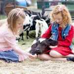 Fall and Halloween fun with corn, animals, pumpkins and hayrides at Hee Haw Farms