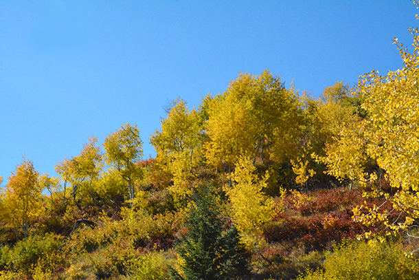 Sundance Resort, autumn leaves, fall (Photo by Rebecca Lane/UV360)